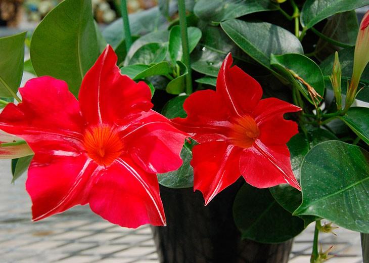 активное цветение