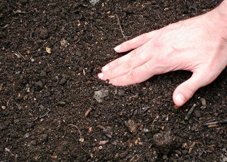 рыхлая почва для рассады