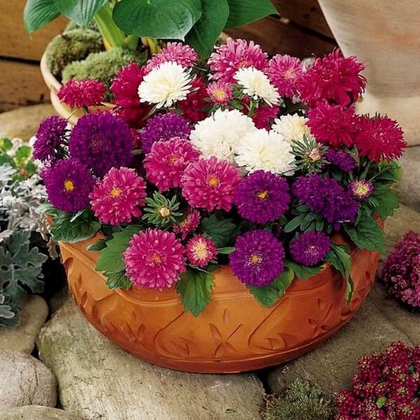 цветы высажены в большой вазон