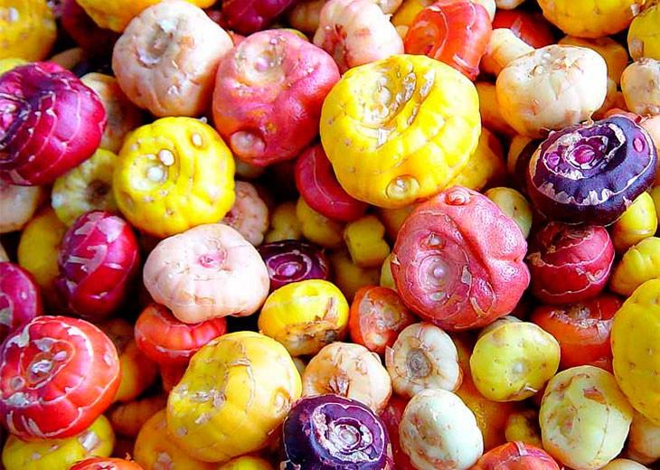разноцветные луковицы гладиолусов