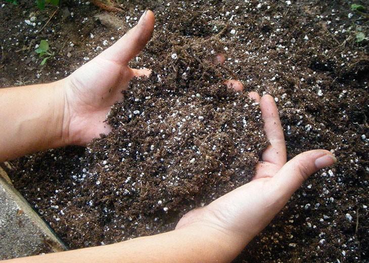 удобренная земля для рассады