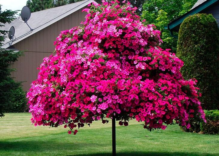 красная петуния в виде дерева