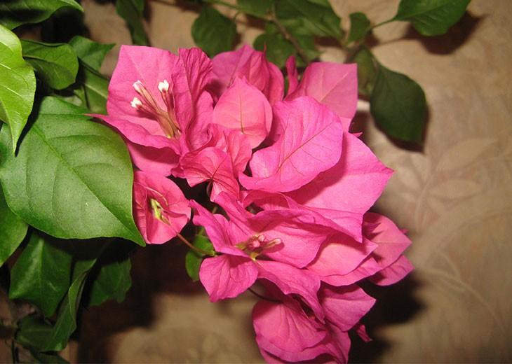 Цветы фото и содержание