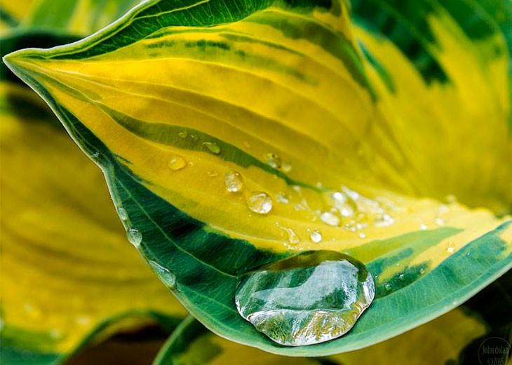 листок с каплей воды