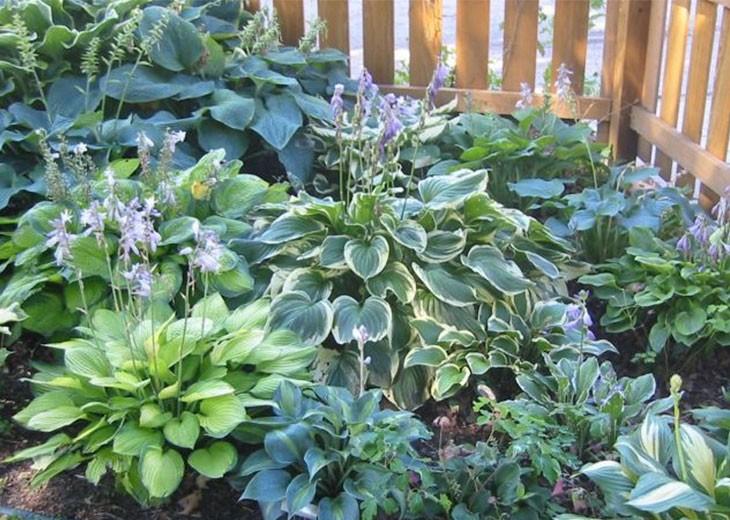различные хосты в одном саду