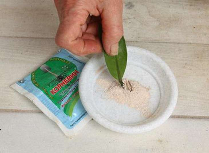 стимулятор роста растений Корневин